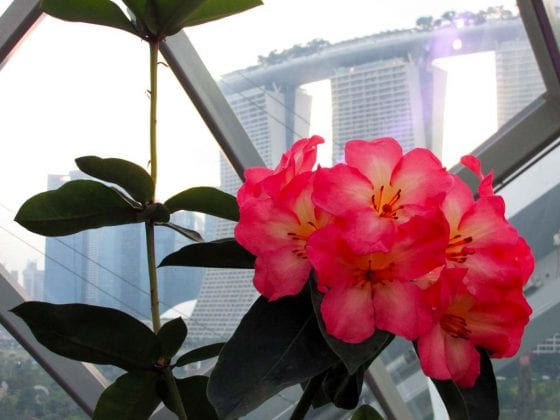 Flowers Marina Bay Sands, Singapore