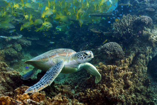Underwater meet-and-greet with sea turtles in New Caledonia
