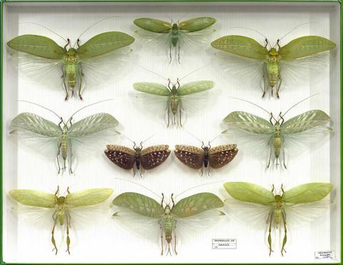 Lyon musee bugs